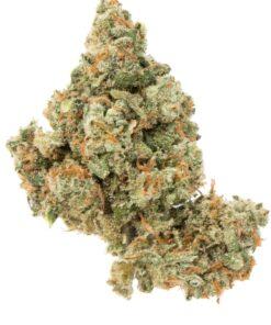 Jack herer weed